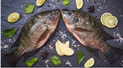 LFISH חנות הדגים הטריים בשומרון להזמנות ומשלוחים מקרניון אינטרנט קרני שומרון LFISH Магазин свежей рыбы в Самарии для заказов и доставки из интернет-центра Karni Shomron