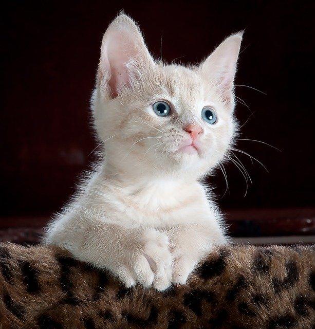 מזון לחתולים ומוצרי חתולים בחיות של מושיק בקניון וירטואלי בקרני שומרון Корм для кошек и товары для кошек в животных Мошика в виртуальном торговом центре в Карней Шомрон